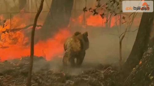 آتش سوزی جنگل های استرالیا