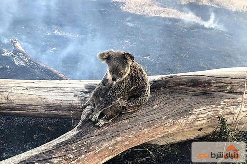 کمک کالین وارد به آتش سوزی جنگل های استرالیا
