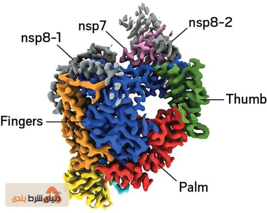 RNA ویروس کرونا