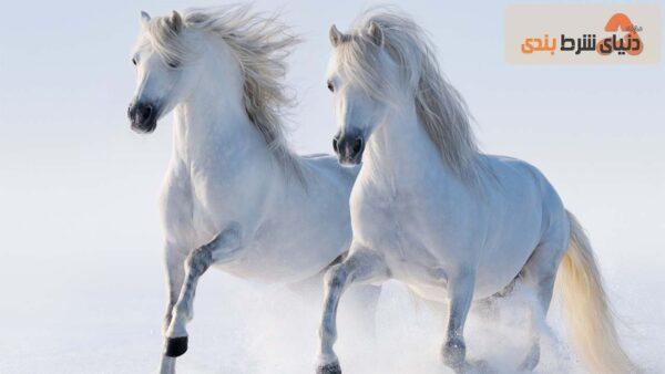 اسب نمادی از خوش ش
